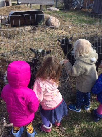 Girls feeding our goats