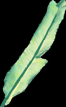 바나나 잎