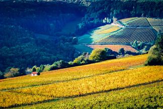 Vignoble de la côte de Beaune - Aérien - Cabotte - Automne.