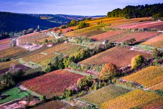 Vignoble de Savigny les Beaune - Aérien.