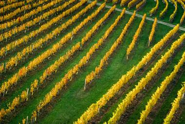 Vignes des Hautes-côtes  de Nuits - Aérien - Automne.