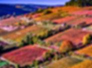 aero_vigne_aurora2019_modifié.jpg