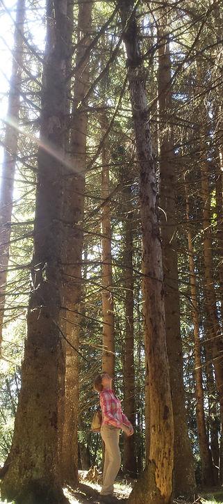 Tree_20180928_edited_edited.jpg