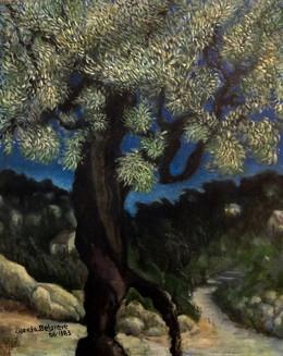 'Olive tree' oil on canvas, 40x50