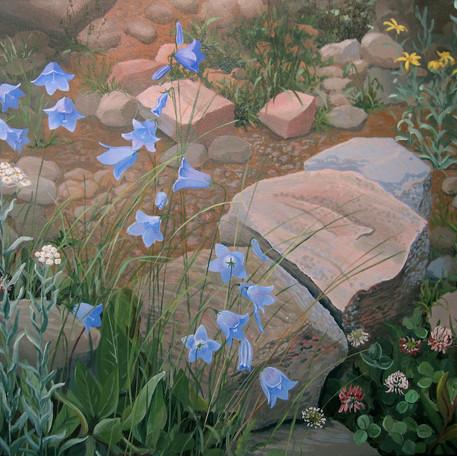 Colorado Bluebells