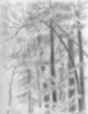SketchMuirWoods.png