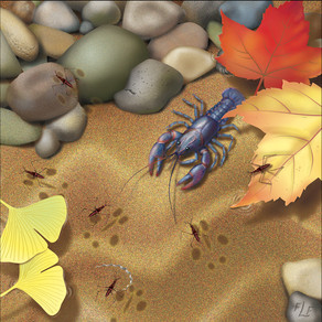 Crawdad & Jesus Bugs