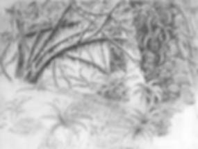 SketchHohRnFor.png