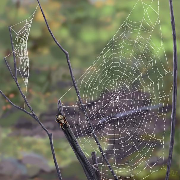 Two Webs and a Barn Spider  – Araneus cavaticus, aka Charlotte