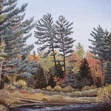 Good Campsite – Oswagatchie River