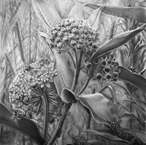 Milkweed Denizens