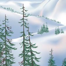 Pines at Dawn