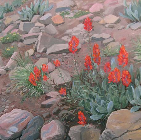 Wyoming Fireweed