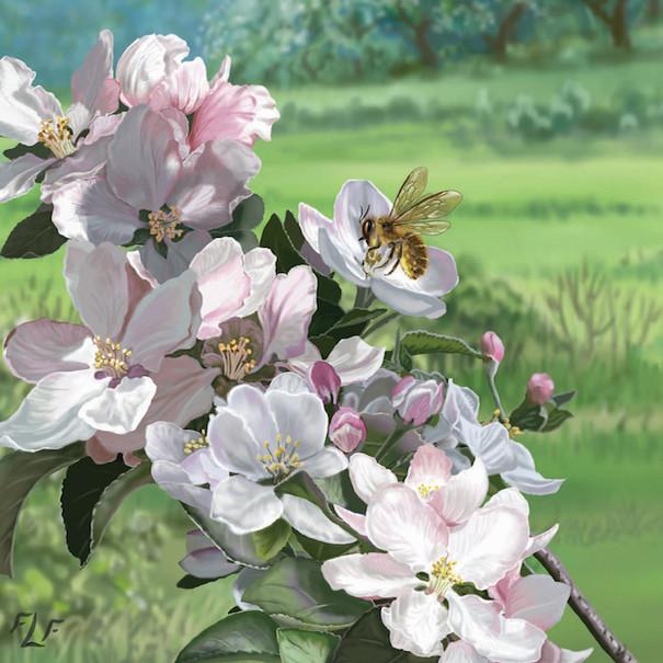 Osmia cornifrons on Apple Blossoms