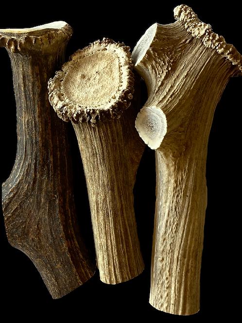 Mammoth Elk Antler Chew