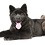 Thumbnail: T-Rex Antler Chew