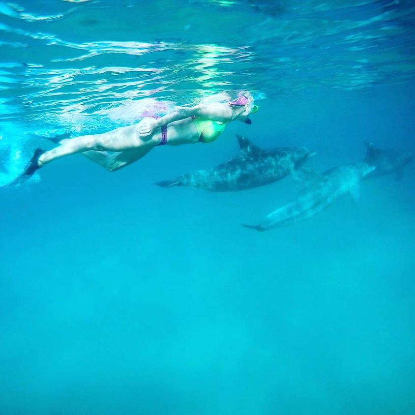 Delfiinienergia meditatsioon (1)