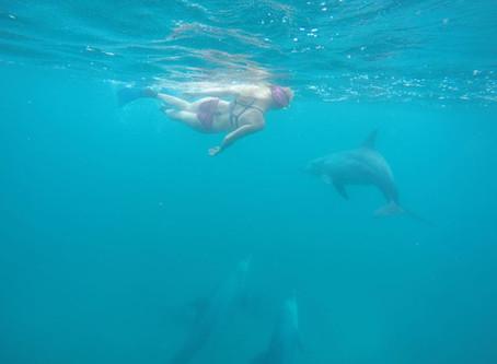 Maagilisest delfiinienergiast