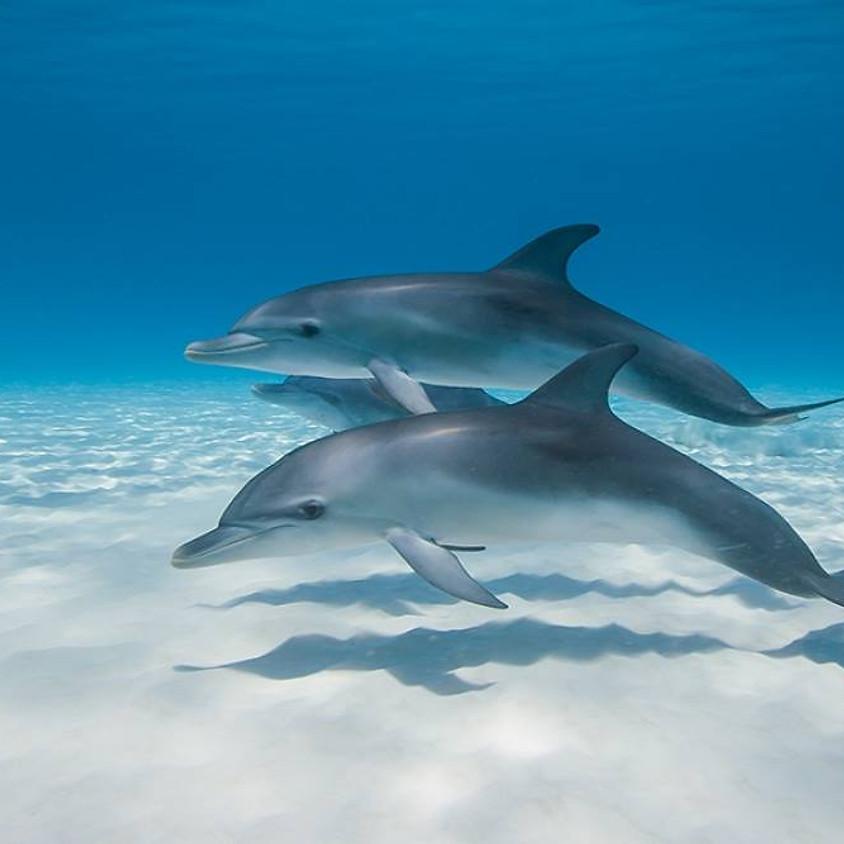 Delfiinienergia meditatsioon