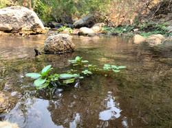 Tejon Creek-RH