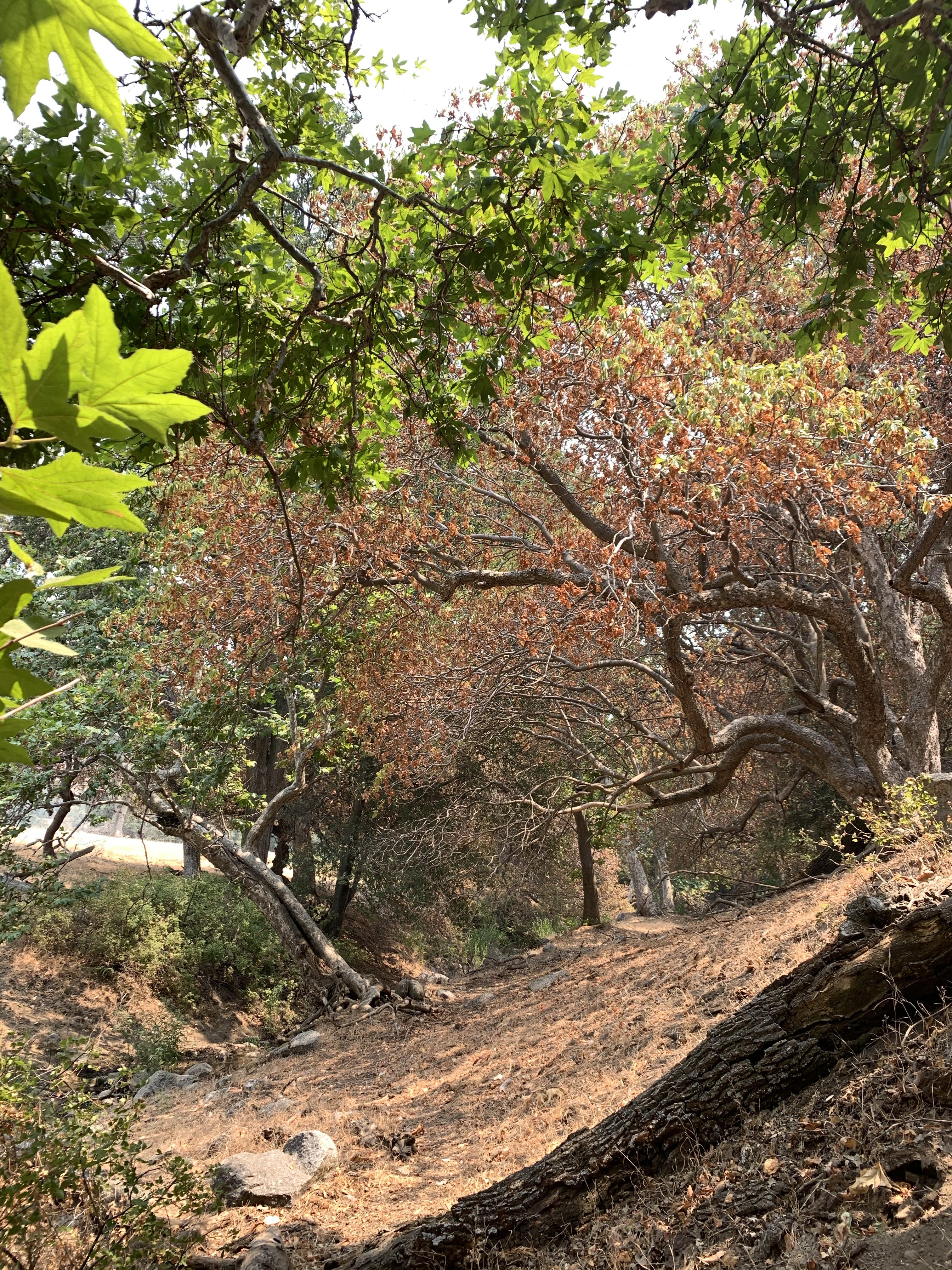 Tejon Canyon-RH