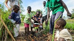 Kupanda Malawi food forest.jpg