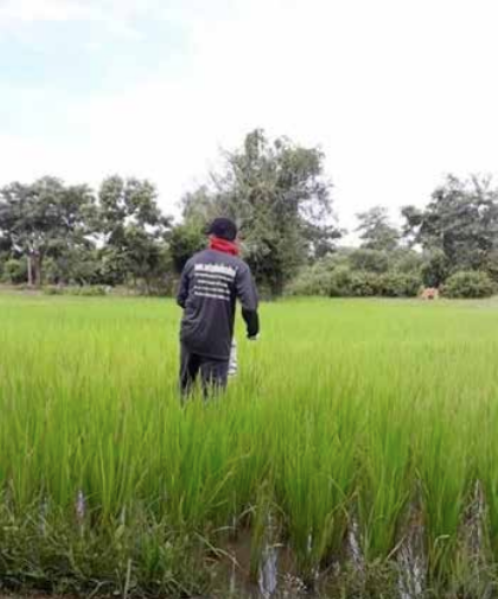 Agriculture is the foundation of Laos' economy but has not developed as anticipated.