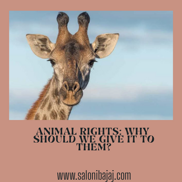 Animal Rights: Why should we give it to them?