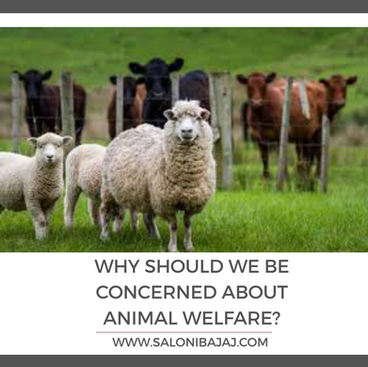 Why should we be concerned about animal welfare?