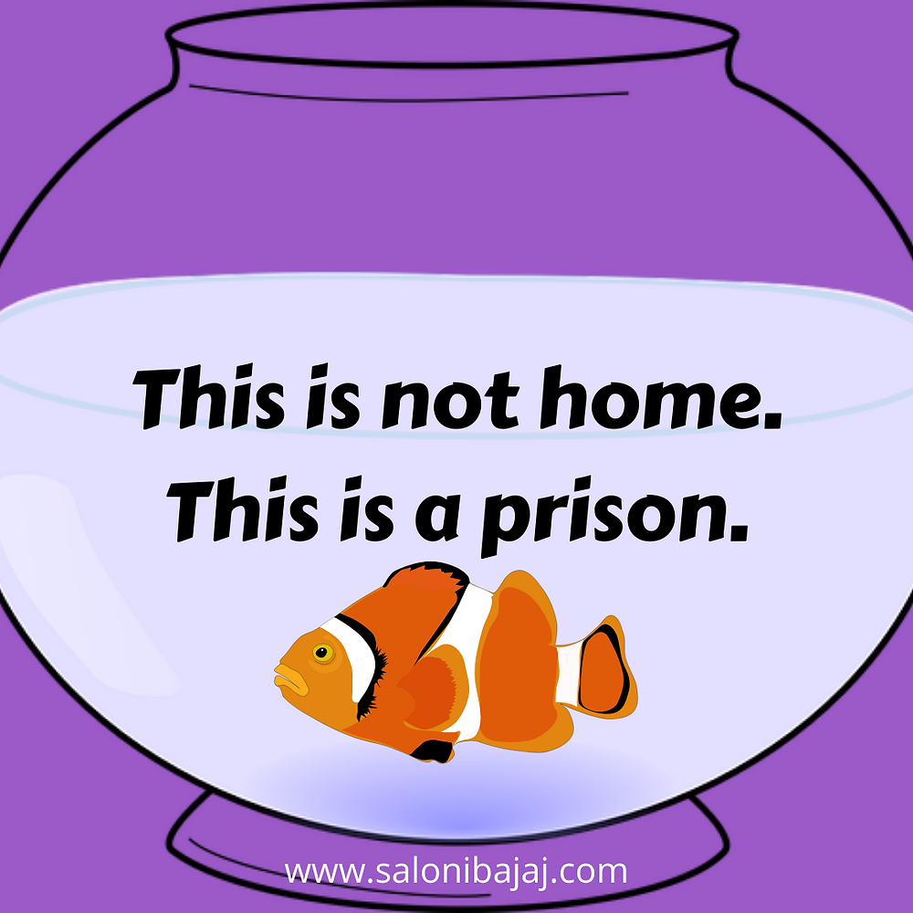 A pot or an aquarium is not a home for a fish or any other marine creature, it's a prison for life.