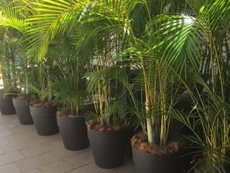 Statement Plants in Decorative Pots