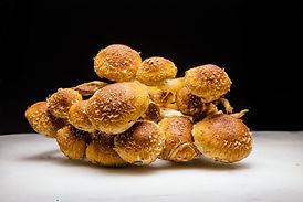 Wagoga Gourmet Mushrooms