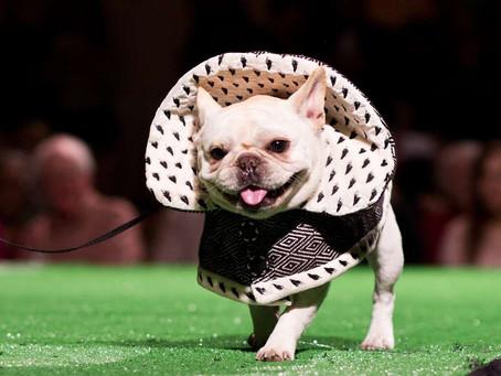 The Bark Deco Dog Show