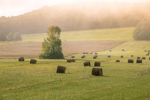 """Farm at Ethereal Dawn"" - 13"" x 19"" Print"