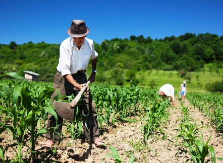 Produtores rurais ganham linha de crédito emergencial