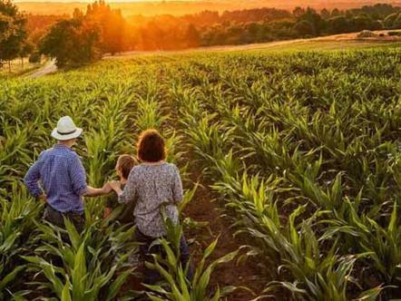 Geração de renda com a agricultura familiar