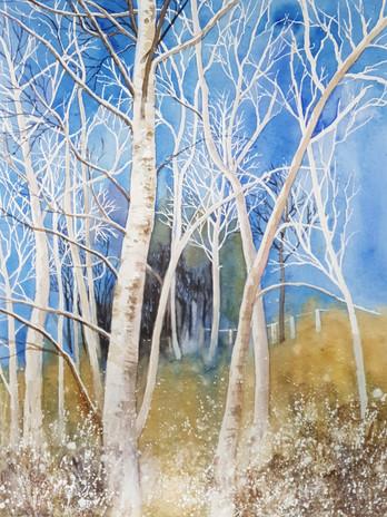 Ettrich Birches