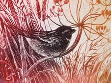 September Sparrow