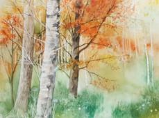 Autumn in Thirlstane
