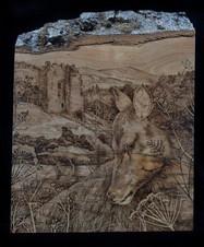 The Deer by Neidpath Castle - Stephanie