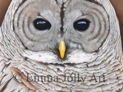 This weeks spotlight - Local artist Emma Jolly