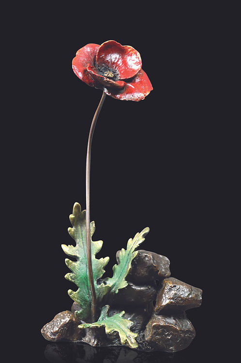 Poppy by Kevin Sherwin