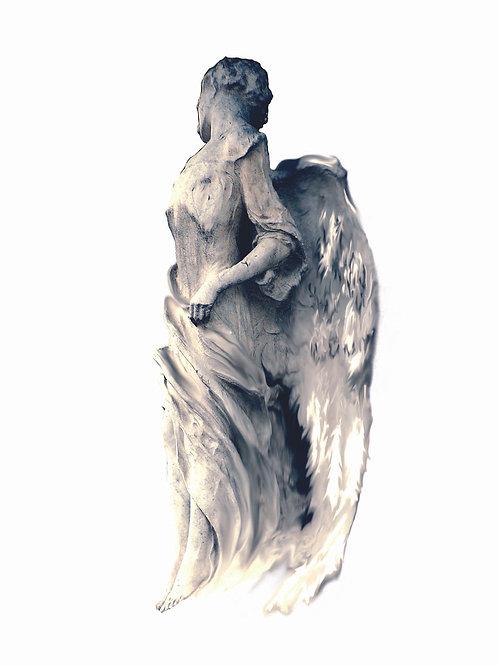 Engel 24