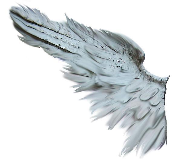 Angels in progress - Engelsflügel | Das Web ABO | Webdesign | Professionelle Webseite