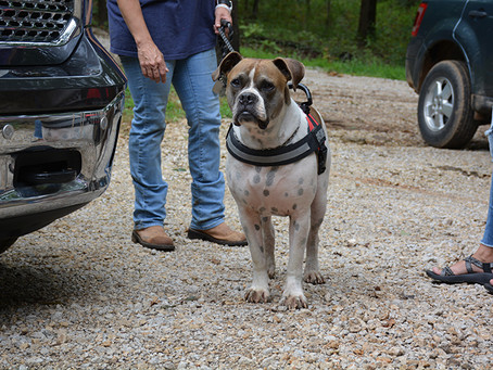 Service Dogs of Distinction: Warhorse Legacy Ranch