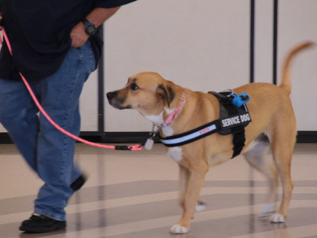 Service Dogs of Distinction: Entry Process & Begining Training