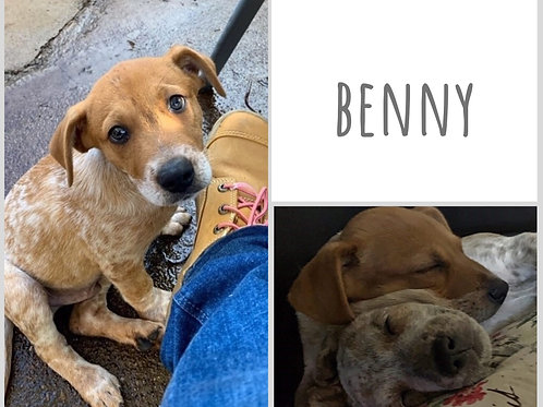 Benny (nugget)