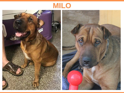 Milo (or Clarabelle)