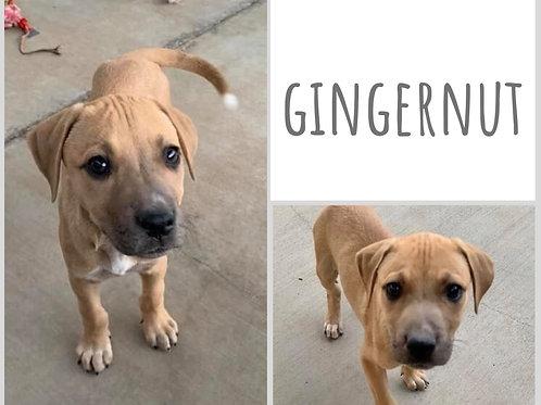 Gingernut