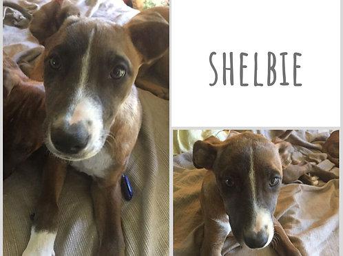 Shelbie